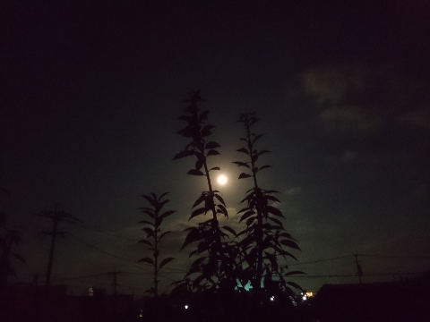 2014-11-07-04-58-28_photo (2) (480x360).jpg